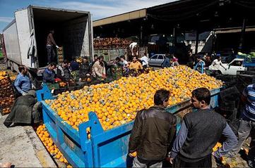 نزاع پرتقالی برای جیبهای گشاد