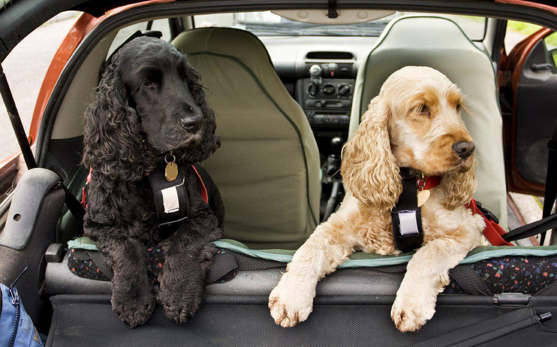 نگهداري سگ در منزل،حیوان آزاری یا حیوان دوستی؟