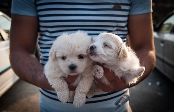 نگهداری سگ در منزل، حیوان آزاری یا حیوان دوستی؟