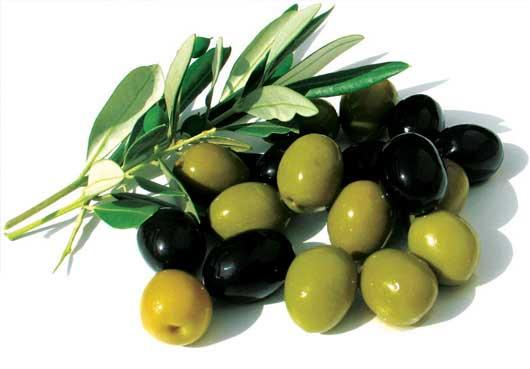 خواص گیاه زیتون ، روغن زیتون  و عصاره زیتون
